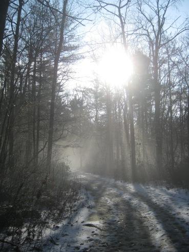 Foxborough forest 1 (2)